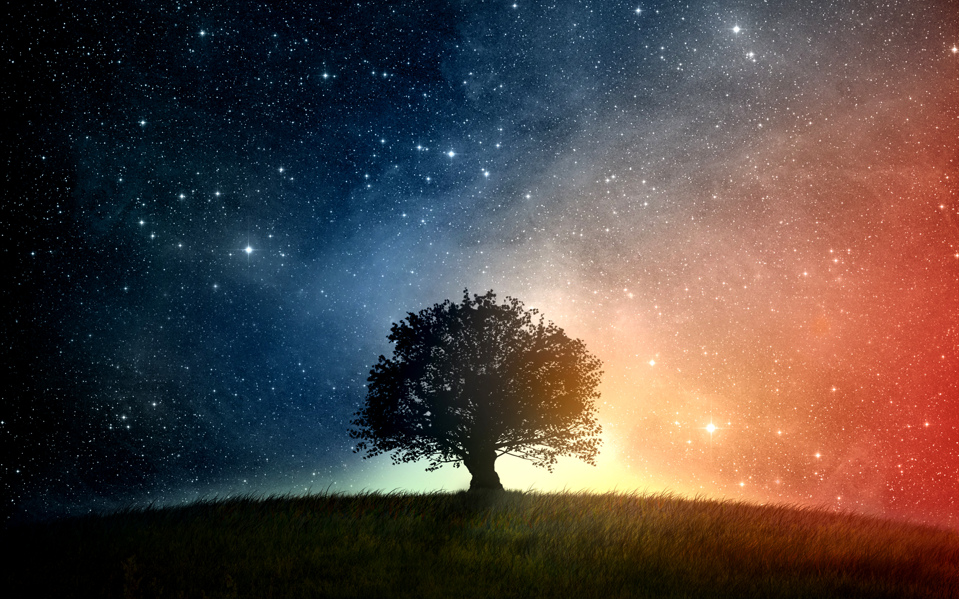 cosmosition_very_old-tree.jpg